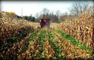 Cover crops boost profits for veggie growers, lower them for grain and oilseed farmers: study