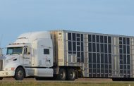 Livestock trucking protections fast-tracked
