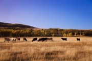 Rotational grazing could be both a carbon reduction and business strategy: study