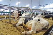 FCC: Cautious optimism for dairy sector as prices and demand recover
