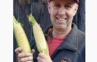 WESTERN ONTARIO: Sweet corn, sweet sales