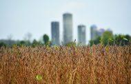 EASTERN ONTARIO: Soybean yield prediction: highly variable