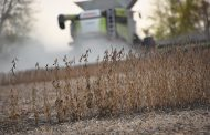 EASTERN ONTARIO: Soybeans had a parched season but a soggy finish