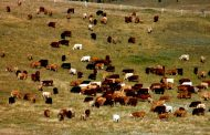 UPSIDE: Expect livestock prices to improve, FCC says