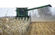 EASTERN ONTARIO: No bin-buster but corn yields better than expected