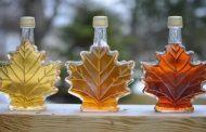 Southwestern Ontario maple syrup producers see average season
