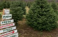 Get your Christmas tree early: industry organization expecting a shortage