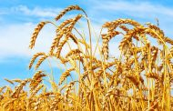 GFO to wind down wheat pool for lack of use