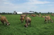Got Jersey cows? You just got an income boost