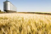 Canada launches consultation Canada Grain Act ahead of first changes in 50 years