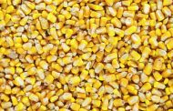 China makes huge U.S. corn purchase