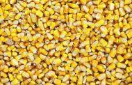 China makes huge U.S. corn purchase