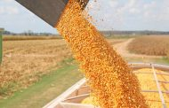Agricorp: Strong corn and soybean yields in 2020