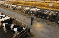 FCC: Dairy farmers should see revenue gains again in 2021