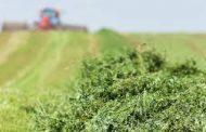 Forage shortage means tough decisions for Atlantic Canada farms