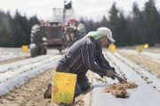New COVID rules could keep migrant workers out of Canada