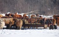 Abattoirs, risk management and slow-moving vehicles top priorities for Beef Farmers of Ontario at last month's annual meeting