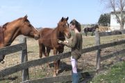 More than a dozen Ontario horse rescue centres need rescuing