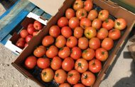 Grower about to throw out 15 skids of tomatoes when social media came to the rescue