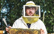 Fake honey crowds market but beekeepers not abuzz with concern