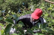 Farm group defends migrant worker program