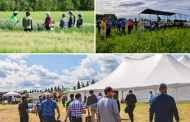 While Ontario wavers, Alberta farm groups restart in-person field days