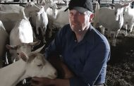 Survivors: Dairy goat farmers hammered by COVID but optimistic about future growth
