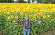Farmers grew sunflowers for a change and got surprising results