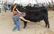 Some rural fairs get the green light, sort of