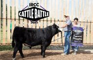 Cattle Battle beef show draws almost 300 entries