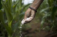 Surging fertilizer costs risk making food even pricier next year