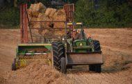 Early harvest: Eastern Ontario wheat looks good
