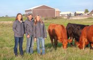 Paddock innovation: 32 one-acre sections and cattle moved daily